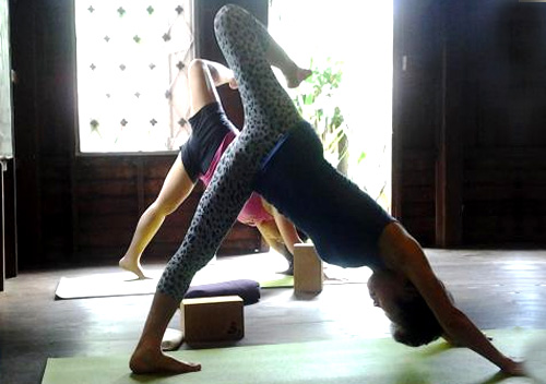 Wild Rose Yoga & Pranaya Yoga Teacher Training